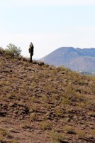 A lone cactus at Lookout Mountain in Phoenix.